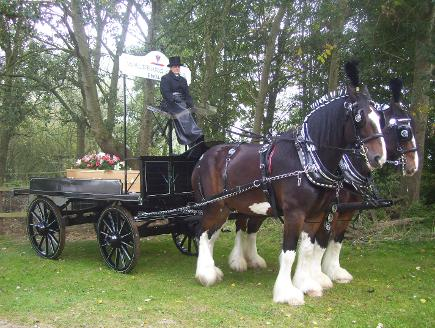 The Waldburg Shire Horses